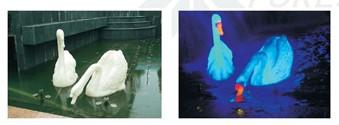 西安发光雕塑—白天鹅